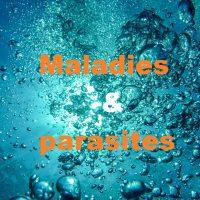 Maladies et parasites