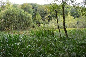 Zone humide naturelle (Vallée de Châtillon, 2020)