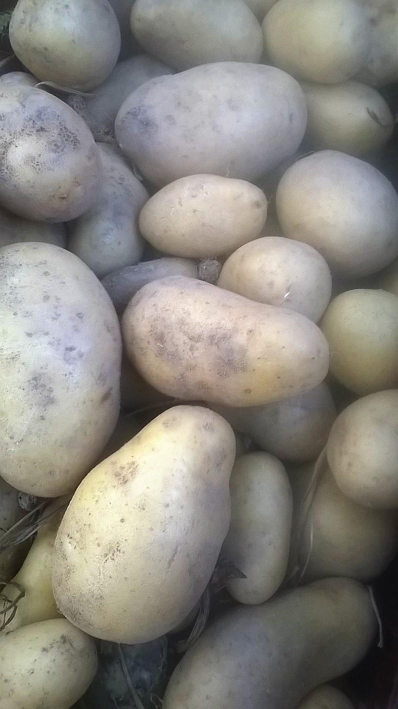 Pomme de terre ALOUETTE (Purée/ Frite) BIO – 500g