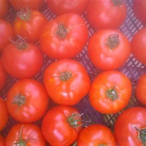 Tomate Ronde Jon'Bio – 500 g