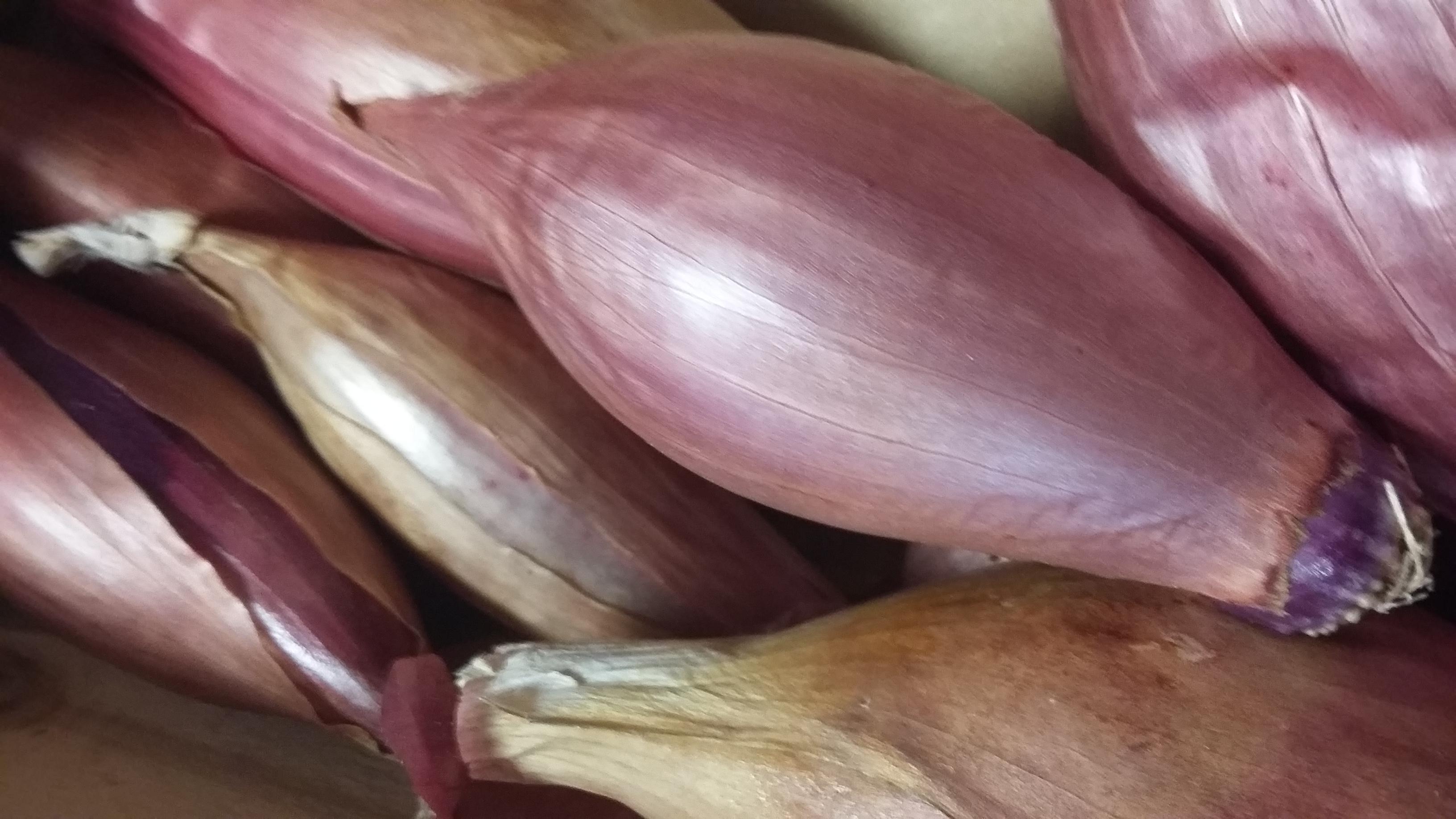 Oignon Rose GROS CAPS Bio – 500g